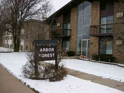 Arbor Forest